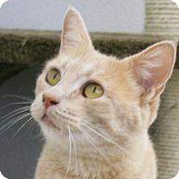 Adopt A Pet :: Harrah VALENTINE'S SPECIAL! 50 - Republic, WA
