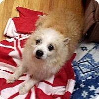 Adopt A Pet :: Vinnie - Eldora, IA