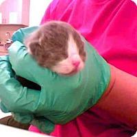 Adopt A Pet :: A272388 - Conroe, TX