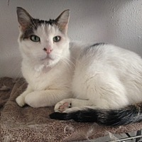 Adopt A Pet :: Syd - Colorado Springs, CO