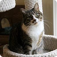 Adopt A Pet :: Birdie - Gaithersburg, MD
