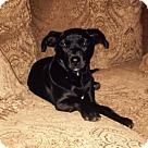 Adopt A Pet :: Miles
