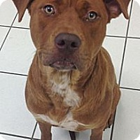Adopt A Pet :: Dixie - Chicago, IL