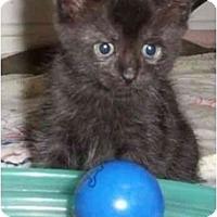 Adopt A Pet :: Francine - Reston, VA