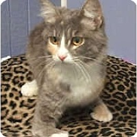 Adopt A Pet :: Gidget - Anchorage, AK