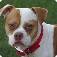 Adopt A Pet :: Gordy - Scottsdale, AZ