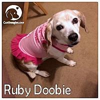 Adopt A Pet :: Ruby Doobie - Novi, MI