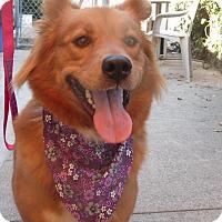 Adopt A Pet :: Angel - Sacramento, CA