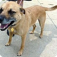 Adopt A Pet :: #533-14 Rodney@Animal Shelter - Zanesville, OH