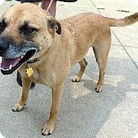Adopt A Pet :: #533-14 Rodney@Animal Shelter - Zanesville, OH