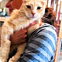 Adopt A Pet :: Little Lion Leo - Davis, CA