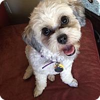 Adopt A Pet :: Pebbles - Buena Park, CA
