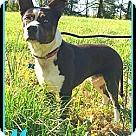 Adopt A Pet :: MANNY