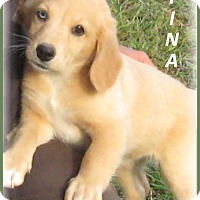 Adopt A Pet :: Tina-ADOPTION PENDING - Marlborough, MA