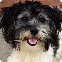Adopt A Pet :: SHEILA (video) - Los Angeles, CA