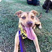 Adopt A Pet :: Hennessy - San Diego, CA