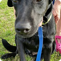 Adopt A Pet :: Marshal - Weatherford, TX