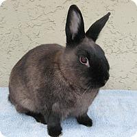 Adopt A Pet :: Brindlelynn - Bonita, CA