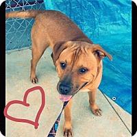 Adopt A Pet :: Bearfoot - Charlemont, MA