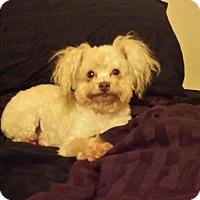 Adopt A Pet :: Dex - Windermere, FL