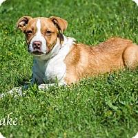 Adopt A Pet :: Jake - Lancaster, TX