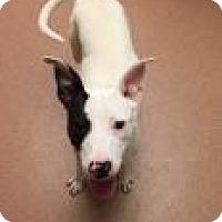 Adopt A Pet :: Tosha 9778 - Columbus, GA