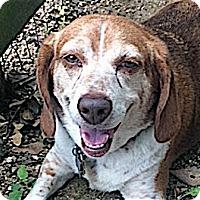 Adopt A Pet :: Heather - Houston, TX