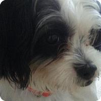Adopt A Pet :: Oreo - Naples, FL