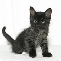 Adopt A Pet :: Phoenix - Lufkin, TX