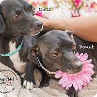 Adopt A Pet :: DONUT - Inland Empire, CA