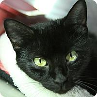 Adopt A Pet :: Rosalita - Sarasota, FL