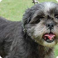 Adopt A Pet :: Lulu - Memphis, TN