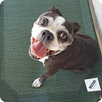 Adopt A Pet :: Brewster - Huntington Beach, CA