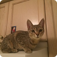 Adopt A Pet :: Scarlett - Burlington, ON