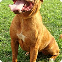 Adopt A Pet :: Adrian - Norwood, GA