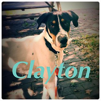 Hound (Unknown Type) Mix Dog for adoption in Greensboro, North Carolina - Clayton