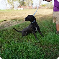Adopt A Pet :: Sadie - Valley Falls, KS