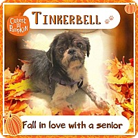 Adopt A Pet :: Tinker Bell - Sharon Center, OH