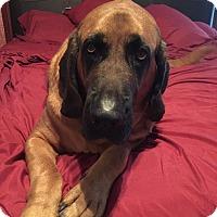 Adopt A Pet :: General Patton - Killeen, TX