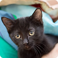 Adopt A Pet :: Christina - Fountain Hills, AZ