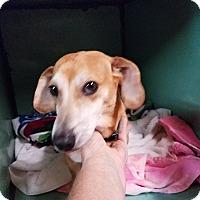 Adopt A Pet :: STRETCH - Lubbock, TX