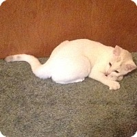 Adopt A Pet :: Sitka - Eureka, CA