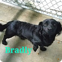 Adopt A Pet :: Bradly - California City, CA