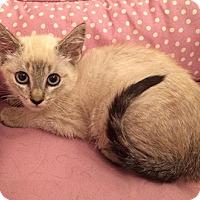 Adopt A Pet :: Delilah - Metairie, LA