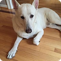 German Shepherd Dog Mix Dog for adoption in Alpharetta, Georgia - Jac