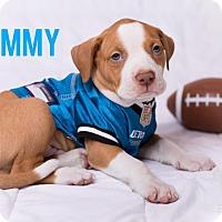 Adopt A Pet :: Tommy - Garden City, MI