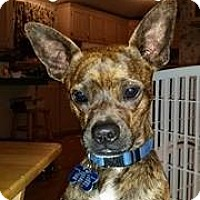 Adopt A Pet :: Zeke - Snyder, TX