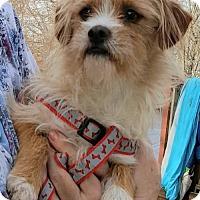 Adopt A Pet :: Buddy - Baileyton, AL