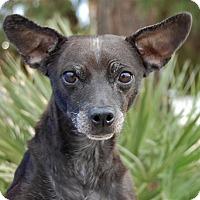 Adopt A Pet :: Patricia - Las Vegas, NV