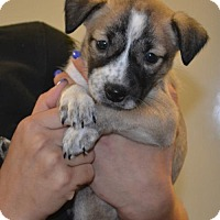 Adopt A Pet :: Magic - Rockwall, TX